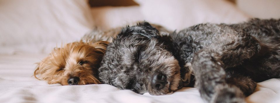 how to find pet friendly apartments